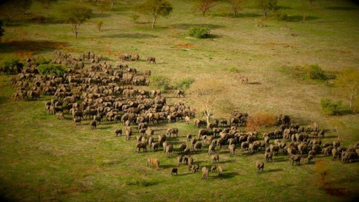 Zakouma National Park Travel Wide Flights