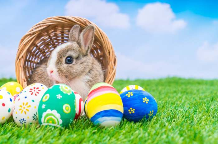 easter 2018, easter holidays packages, places to visit this easter, easter travel guide, easter letter to bunny, easter,Travel,river_cruises_europe,Family holidays,Travel advice,Nick Trend,sun,beaches,Day trips,Short breaks,Family holidays,United Kingdom holidays,Travel,Easter,Life and style, Cheap holidays,Easter,Days out,Family holidays,Holiday cottages and villas,Theme parks