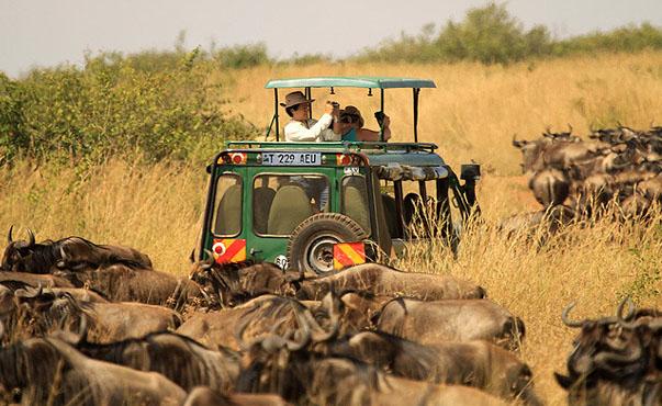 serengeti travel guide, serengeti blog, serengeti things to do, serengeti travel guide, serengeti travel attractions, serengeti places to visit, serengeti, serengeti national park, cheap flights to tanzania, direct flights to tanzania, last minute flights to tanzania, cheap travel, flights to tanzania, direct flights, Kilimanjaro's, things to do in tanzania, things to do in Kilimanjaro's, Kilimanjaro's tours, Kilimanjaro flight deals, last minute flights to tanzania, tanzania travel guide, things to do in tanzania, tanzania tour, tanzania hd images, tanzania tourism, direct flights to tanzania