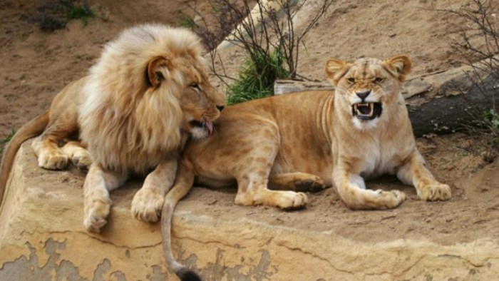 mingle with wildlife in luanda, Travel to Luanda, TravelWideFlights