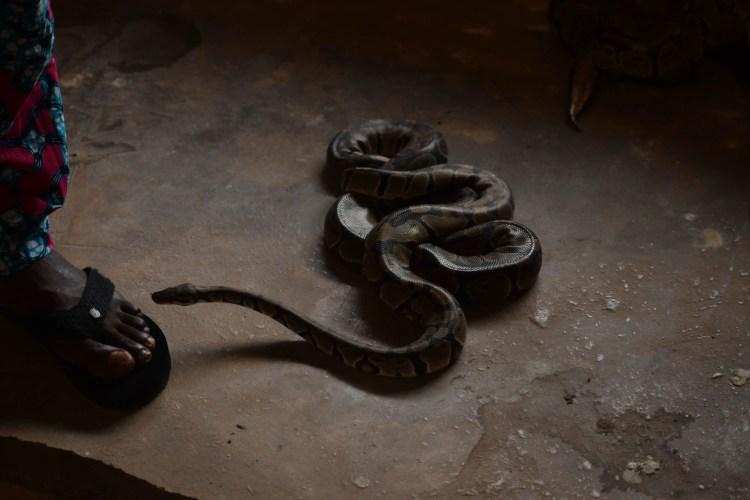 Ouidah snake temple