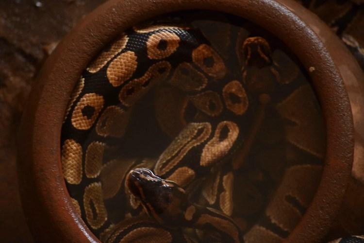 python temple ouidah_benin