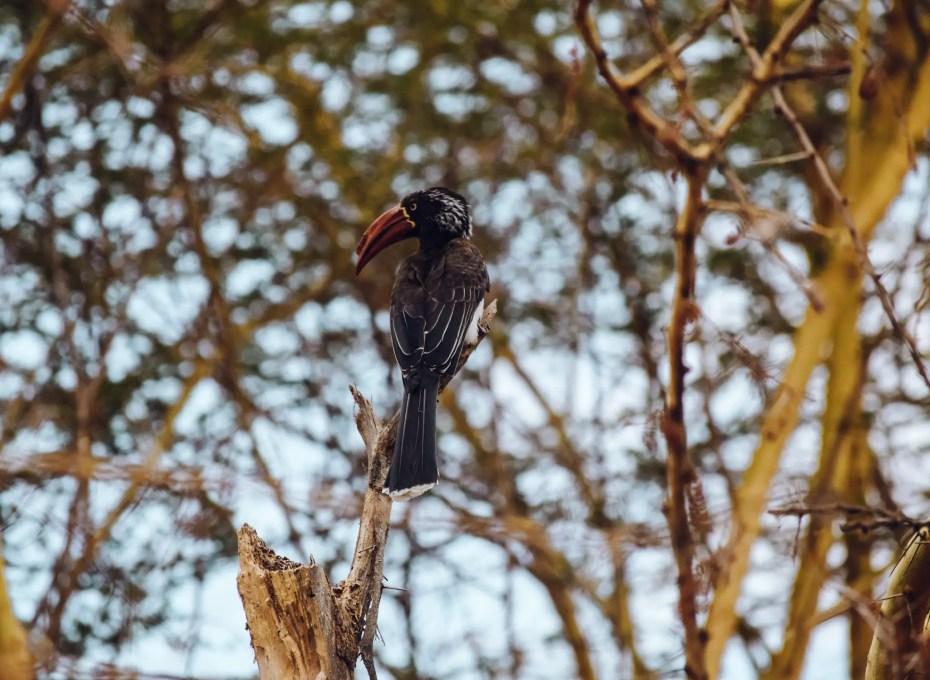 Lake Manyara Tanzania Bird