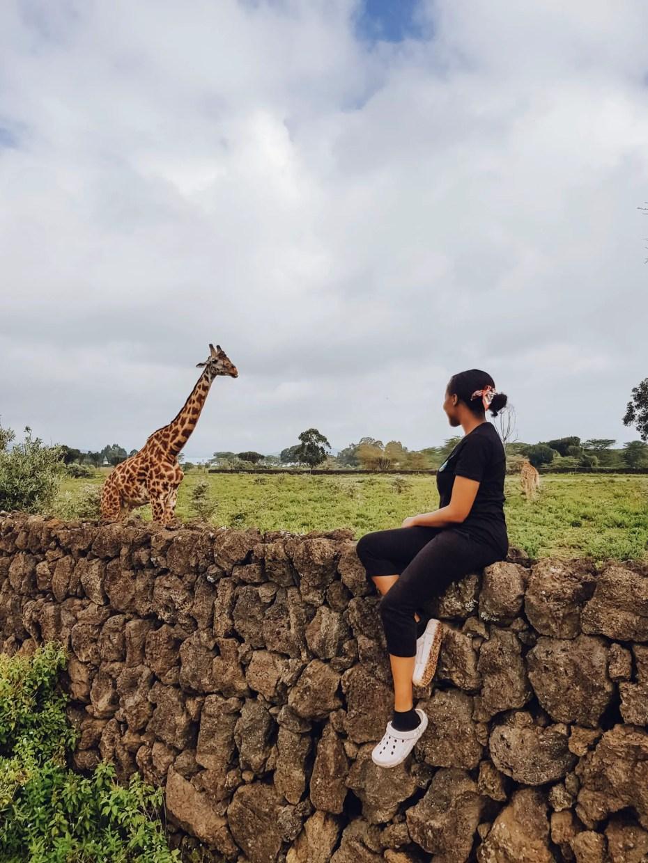 Road side Giraffes Naivasha