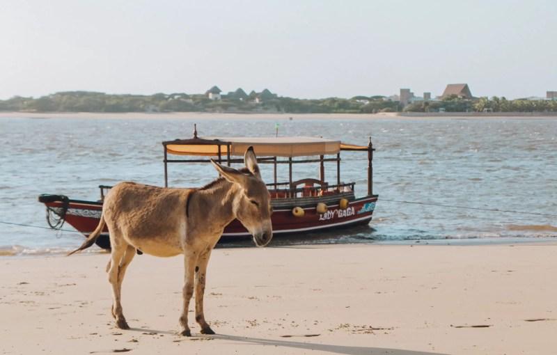 Donkeys Dhows Lamu