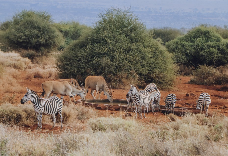 Amboseli Lodges with Watering hole views