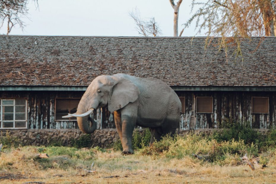 Elephant and an abandoned building