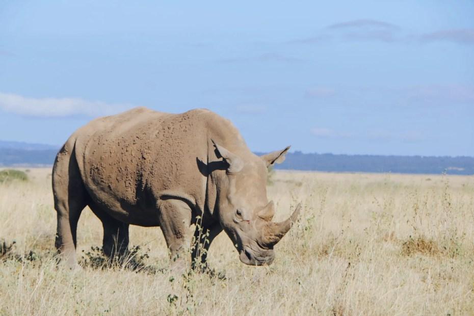 Rhinos on Nairobi National Park Game Drive