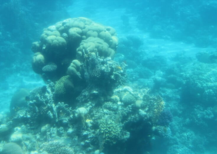 Corals in the Red Sea, Aqaba