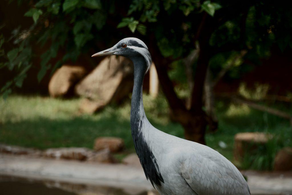 Dierentuin Pretoria, Zuid-Afrika