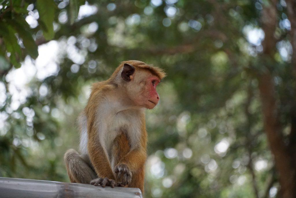 Aap, Sri Lanka