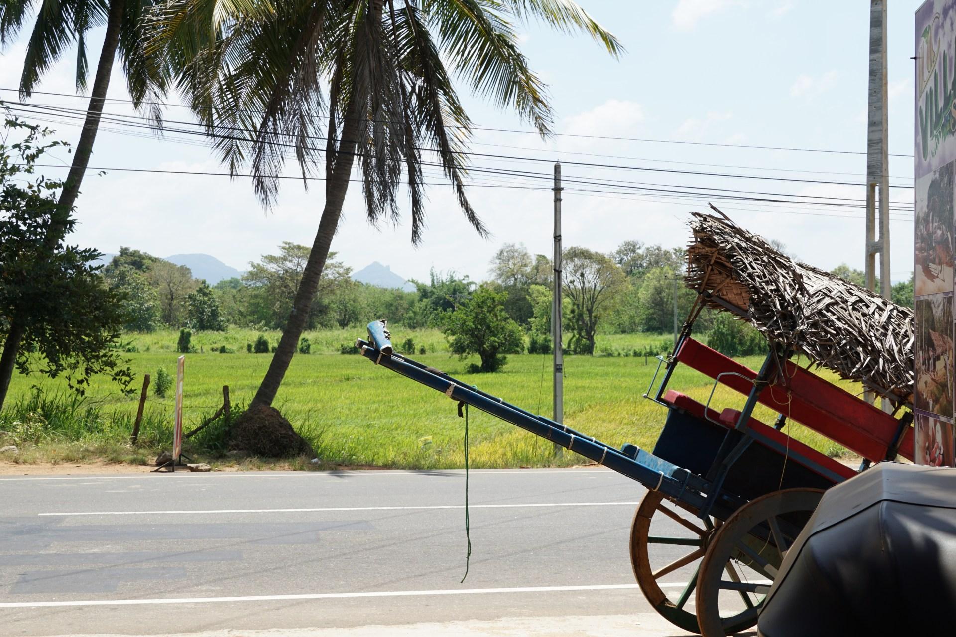 village tour dambulla