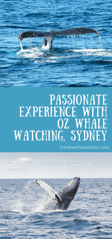Oz Whale Watching Review - Passionate Experience with Oz Whale Watching #whalewatching #sydney #bucketlist #experience #thingstodo