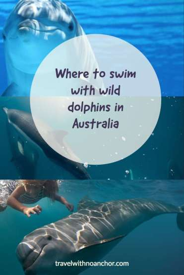 Swimming with dolphins in Australia #swimwithdolphins #dolphins #wilddolphins #australia #waterexperiences