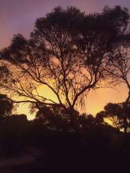 Sunset through the trees at Gleeson's Landing Campground, Yorke Peninsula