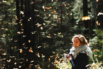 monarch_butterflies_mexico_stanito_1024