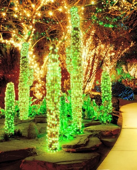 Cactus Garden with their Christmas lights