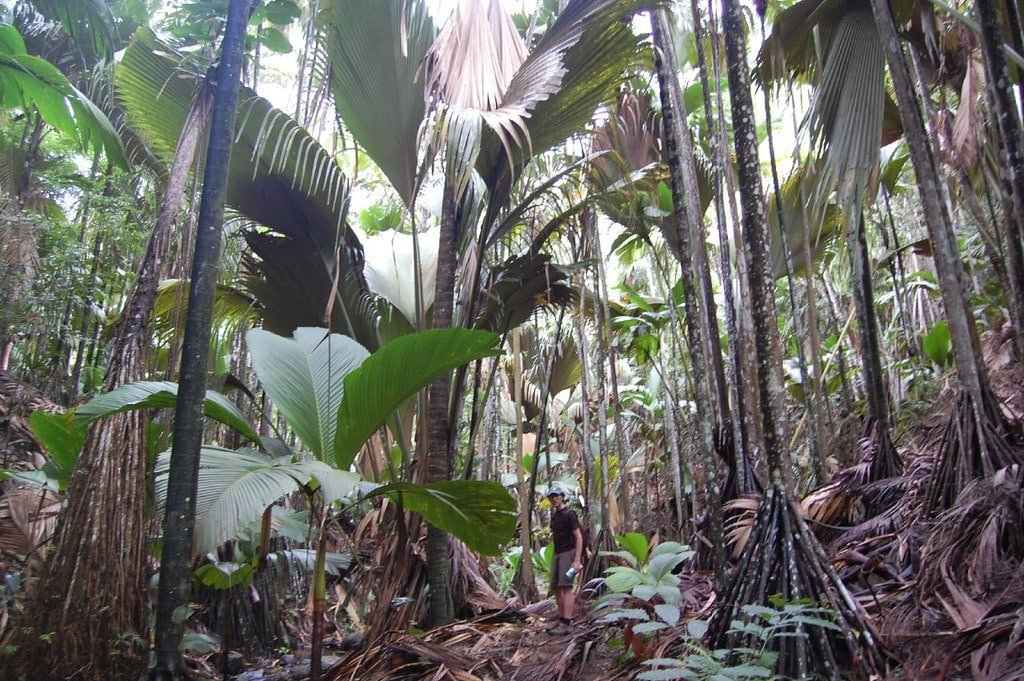 foresta tropicale delle Seychelles