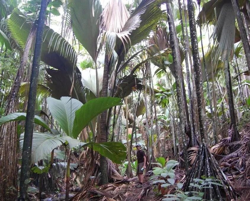 foresta seychelles