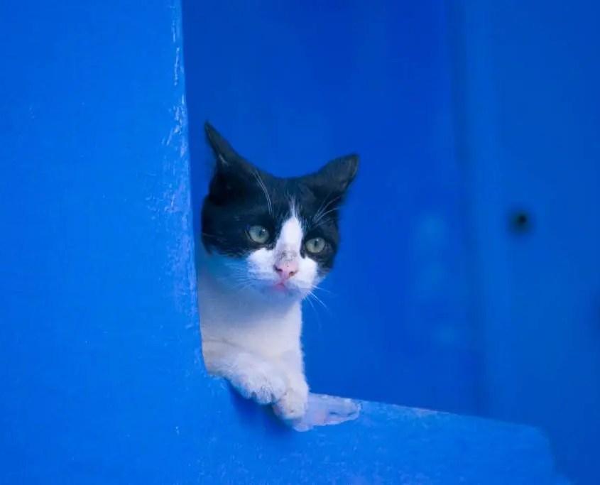 gatto chefchaouen