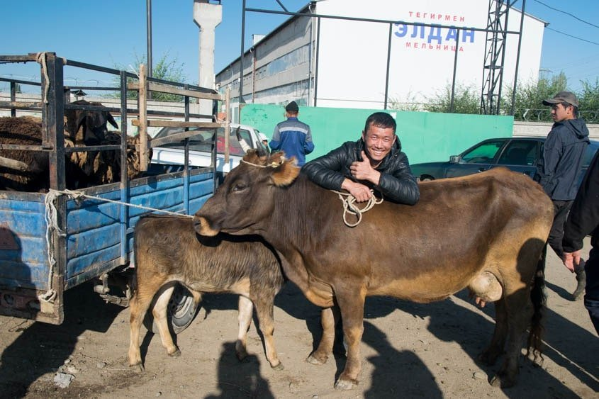 Kirghizistan mercato bestiame
