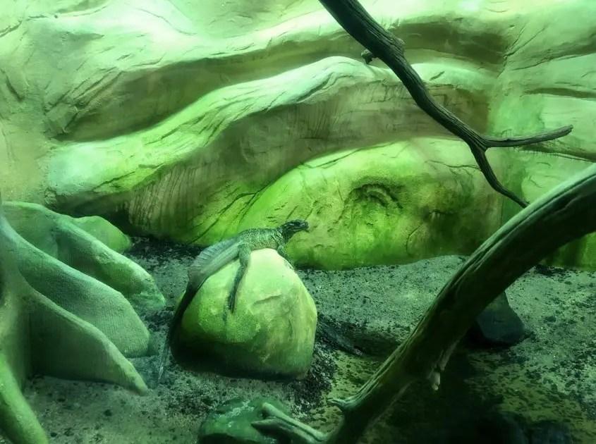 labirinto dei draghi Alligator Bay