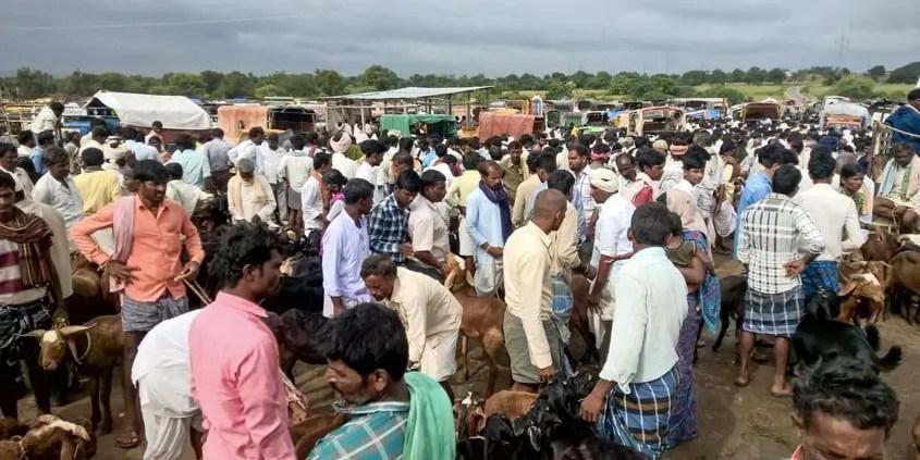 Mercato del bestiame indiano