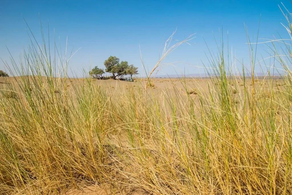 pic-nic nel deserto che sembra più la savana del Marocco