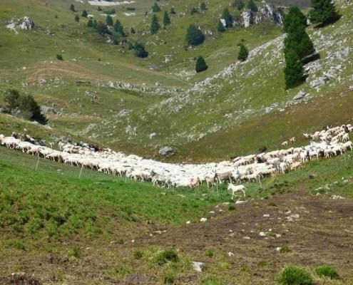 Salto della capra