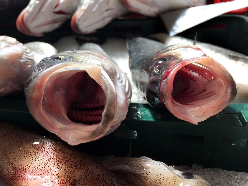 Croatian Open Fish Mouths