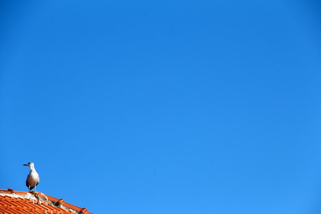 Croatian Skies & Seagulls
