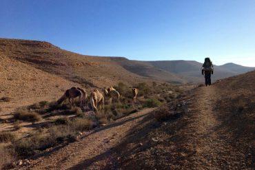 Kamelherde im Hatzaz Tal