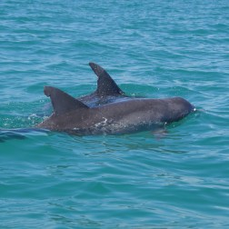 Small eco-tour boats get extremely close to curious dolphins.