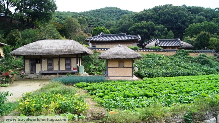 Lettuce and green onion farms in Yangdong