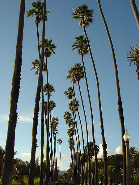 Palm Trees - Returning to America