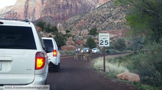 Deer Zion - American road trip