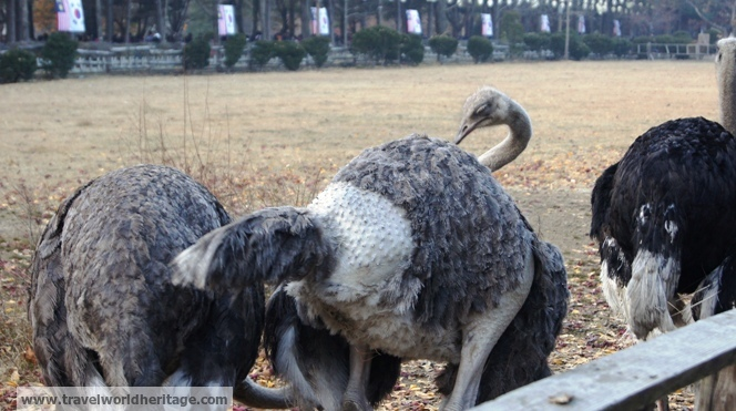 I saw numerous people hit the ostriches, pluck their feathers, or try to feed them paper or garbage. It was truly a sad sight.