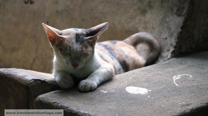 Myanmar Cat 1