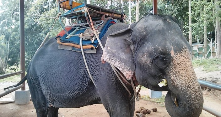 Traveling Wildlife Ethics: You Are NOT Except From Blame Globetrotter