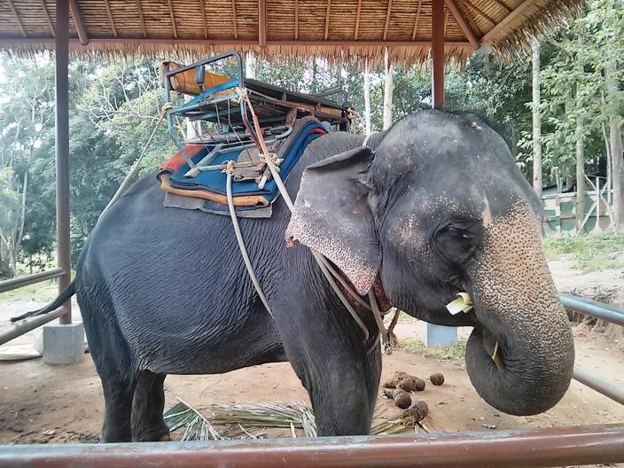 Elephant Ride Koh Samui