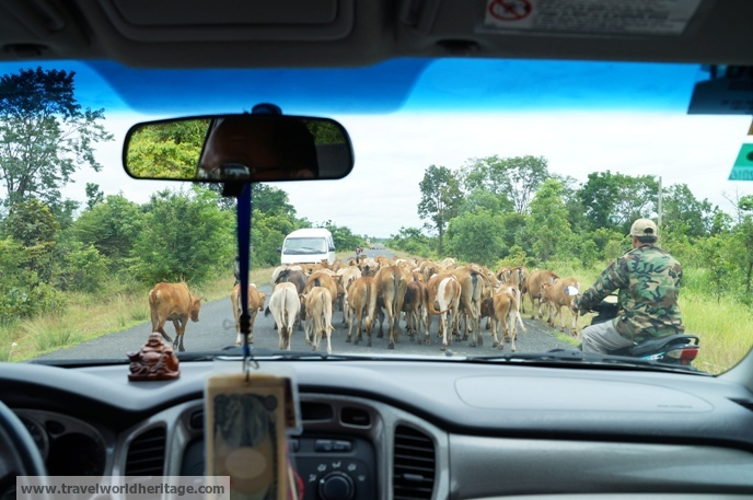 You have to deal with cow traffic on the way.
