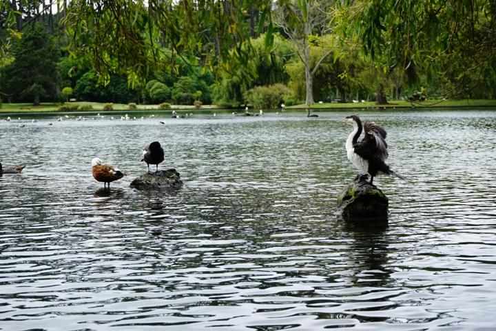 Heron Western Springs
