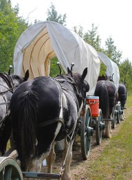 Wagons and horses lineup. Photo by Chris McBeath.