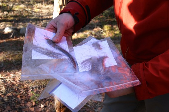 Cataloging fur samples. Photo Credit: Jenn Smith Nelson