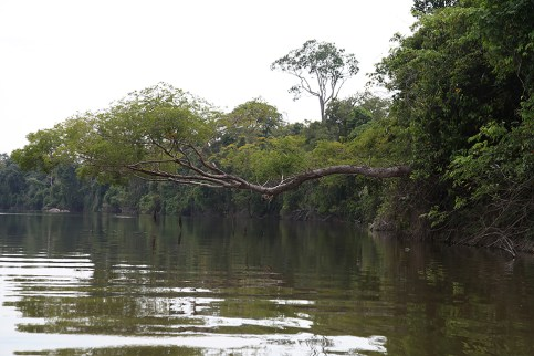 The Amazon jungle covers the land and protrudes out over the water. Photo Credit: Jeffrey Lehmann
