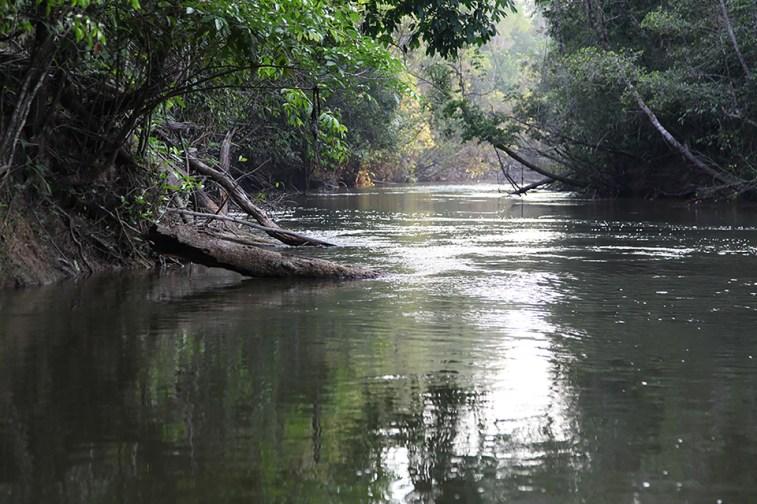 The Roosevelt River, a perilous paradise