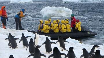 Greeted by Adelie penguins. Photo Credit: Deborah Stone