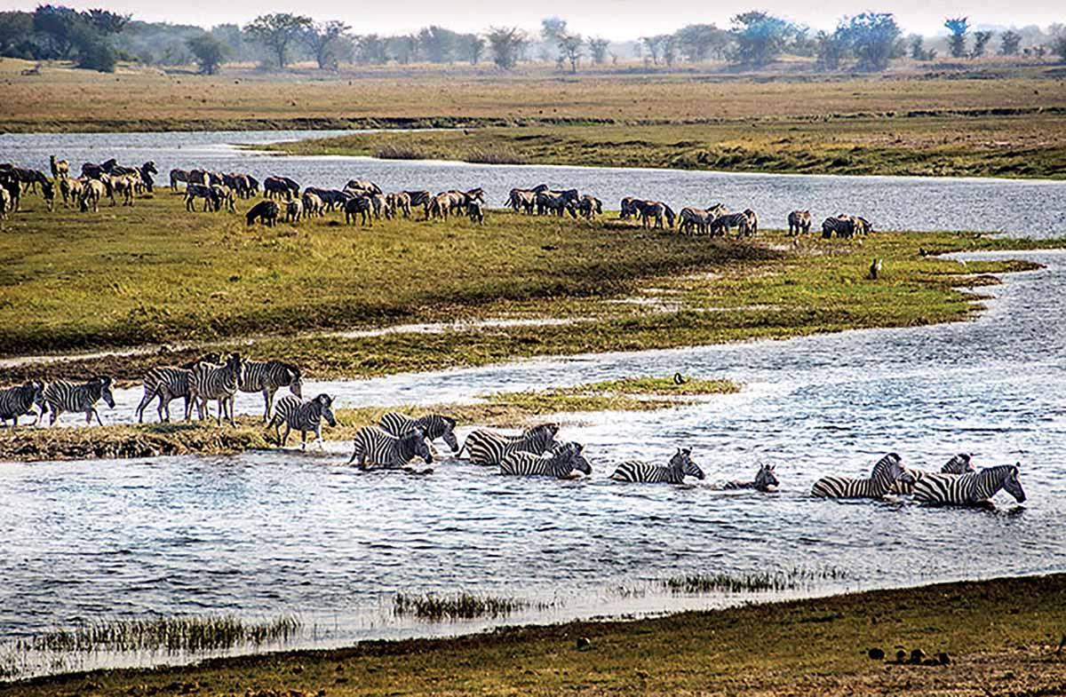 The Ultimate Safari