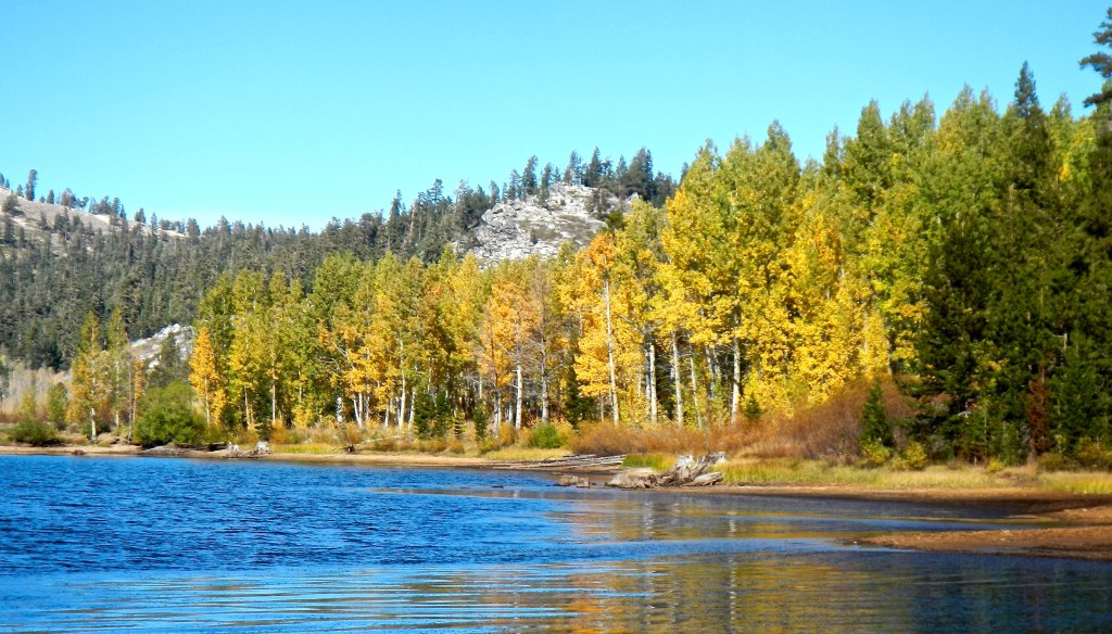 Marlette Lake is decorated with various shades of aspen leaves.