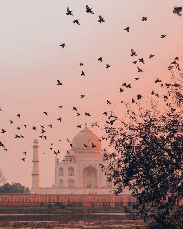 Birds at Taj Mahal